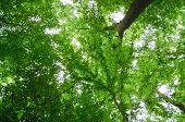 green leaf canopy