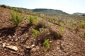 volcanic soil and desert plants