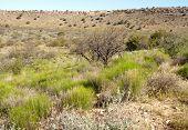 desert bushes and hills