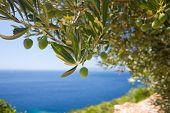 Uma árvore verde-oliva
