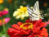 Butterfly Sitting On Flower