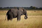 Elefantes de la sabana