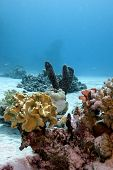 coral reef with soft and hard corals and sea sponge on the bottom of red sea in egypt