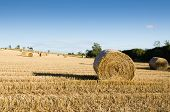 stock photo of hayfield  - Rolled bales of hay in hayfield on a sunny day - JPG