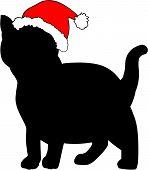 Kitten in Christmas hat