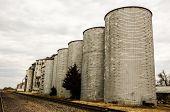 Silos Or Grain Elevators
