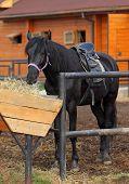 Saddle horse in farm