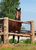 Beautiful sorrel horse