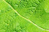 Green Leaf Texture