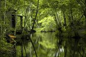 stock photo of bayou  - Photo taken in May of 2005 in New Orleans Swamp - JPG