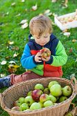 stock photo of crips  - Adorable little boy eating apple in autumn garden - JPG