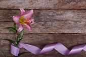 foto of asiatic lily  - Flower frame of pink lilies framed by beautiful ribbon - JPG
