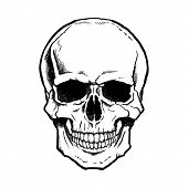 stock photo of jaw-bone  - Black and white human skull with a lower jaw - JPG