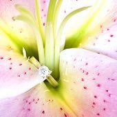 Jewelry, Lilium