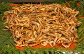 Shrimps For Sale