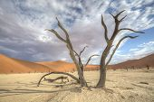 pic of dune  - A big old and dead acacia tree in the foreground by Deadvlei Sossusvlei with red dunes in the background - JPG