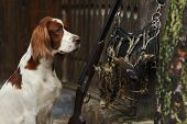 Gun Dog Near To Shot-gun And Trophies
