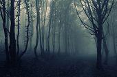 stock photo of eerie  - Dark spooky dark eerie forest with fog on halloween evening - JPG