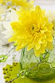 Yellow Chrysanthemum In A Glass Vase