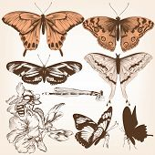 Collection Of Vector Butterflies For Design