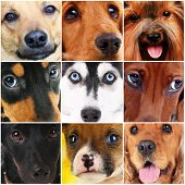 Collage of different cute dogs