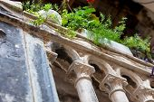 Old Stone Balcony Baluster With Green Plants