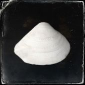 Instagram filtered image of a seashell