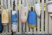 Colorful Boat Buoys Hanging On A White Picket Fence