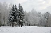 Winter landscape in the park.