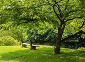 Park Bench Under Flowering Dogwood Tree