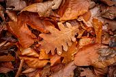 autumn leafage - abstract natural background