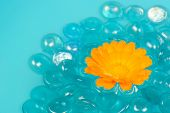 Calendula (Pot Marigold) Flower Floating On Water