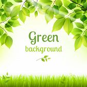 picture of decorative  - Natural green fresh spring leaves and grass botanic foliage decorative background poster print vector illustration - JPG