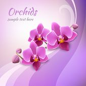 Orchid background template