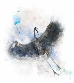 Watercolor Digital Painting Of  Great Blue Heron In Flight