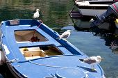 Seagulls On A Boat