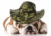 dog wearing hunting hat isolated on white background - english bulldog