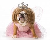 english bulldog wearing blonde wig and princess costume