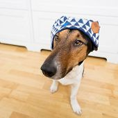 Cute dog wearing hat