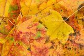 Leaves Fallen On Ground