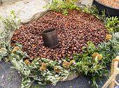 Chestnuts Hedgehog
