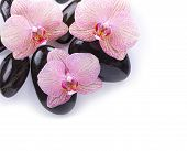 Spa Stones On White Background With Orchids
