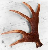 stock photo of antlers  - antlers deer horns elk wood floor decoration - JPG