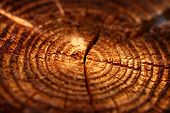 Wooden Background With Cracked Annual Growth Ring