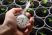 Green Seedling And Hand Holding Stopwatch