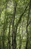 Green Forest In La Palma. Canary Islands. Spain