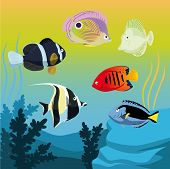 Vector Colorful Fishes