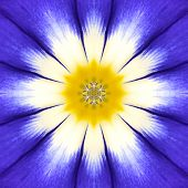Blue Mandala Flower Center. Concentric Kaleidoscope Design