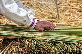 Uru Sorting Reed For Island