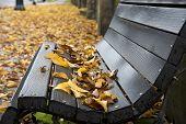 Wet Wooden Bench